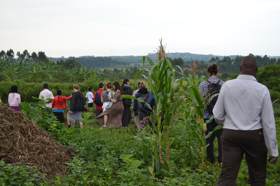 Community-led tour of biofortified crops growing in Mabira Parish, Mbarara District. Photo credit: Tyler Warnock