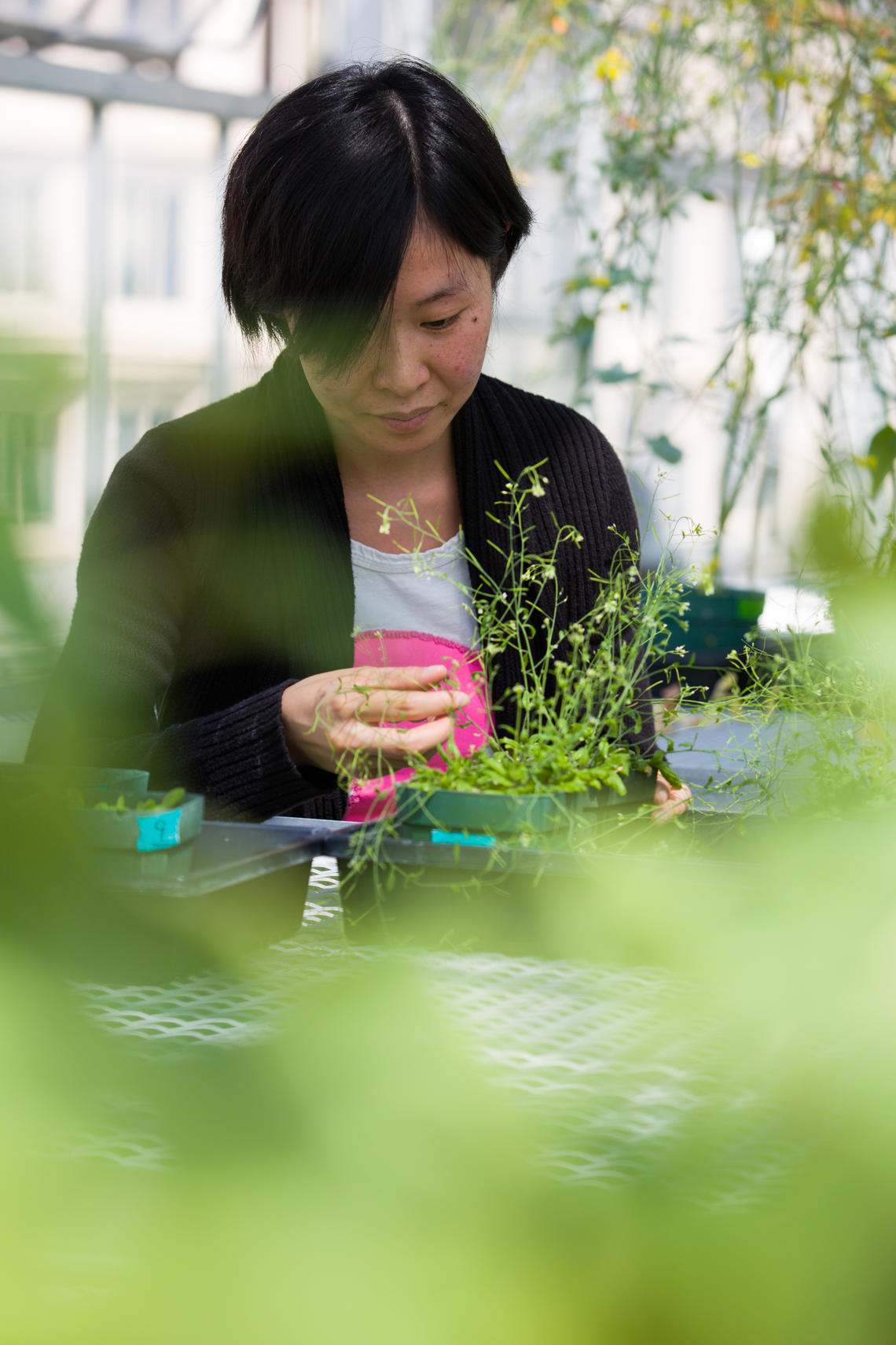 Siyu Liang, PhD student in Samuel's group, says the finding provides a  new way to improve plant drought tolerance.