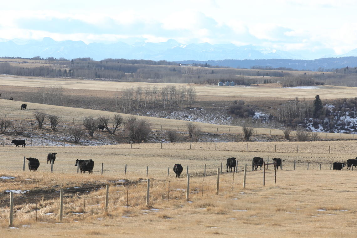The $44-million, 1,000-head working ranch offers incredible opportunities for teaching future veterinarians about beef cattle production and health.