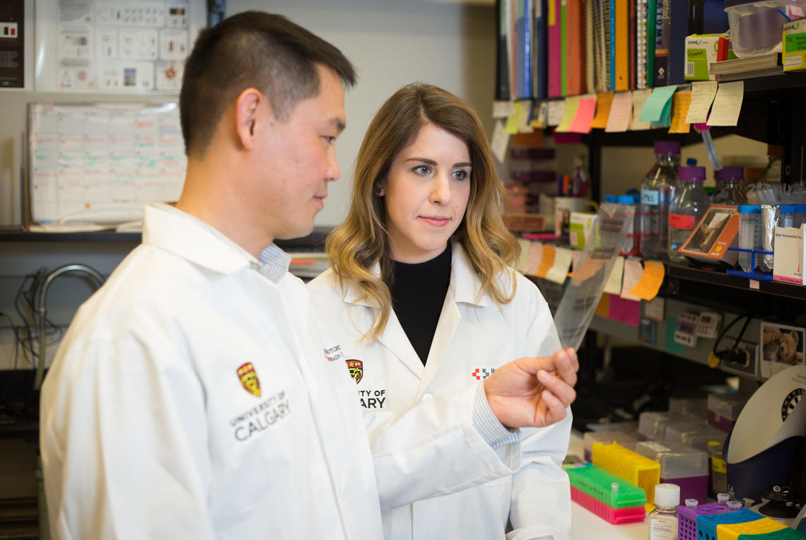 Neuroscientist Tuan Trang, PhD, and PhD student Nicole Burma along with a team of researchers discovered that an existing anti-gout medication is effective in reducing the severity of withdrawal symptoms in opioid-dependent rodents.