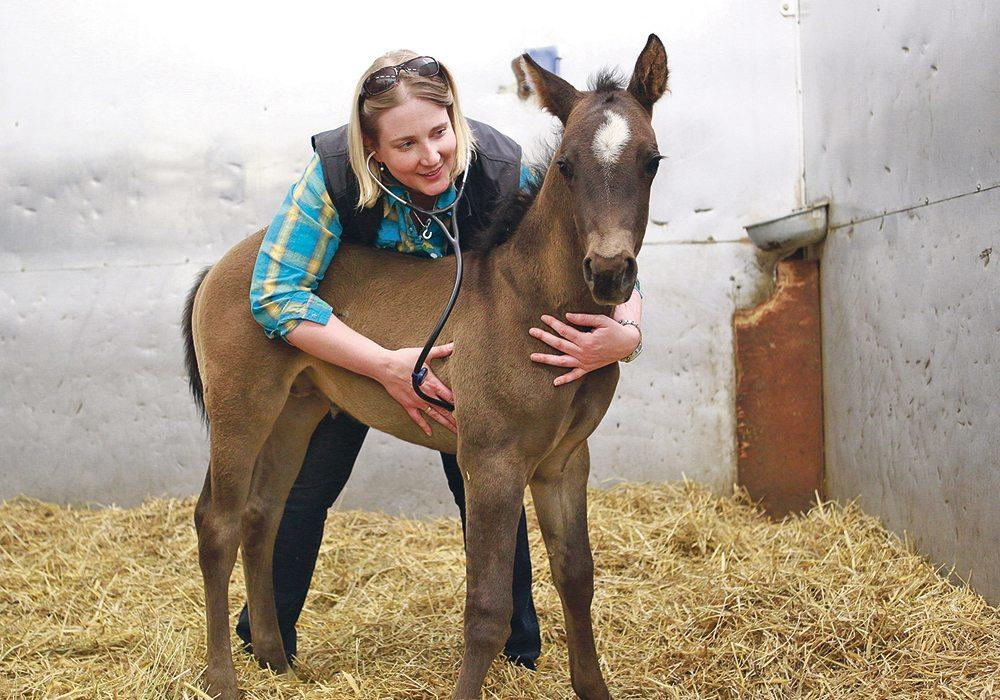 Ashley Whitehead examines a foal at Moore Equine.