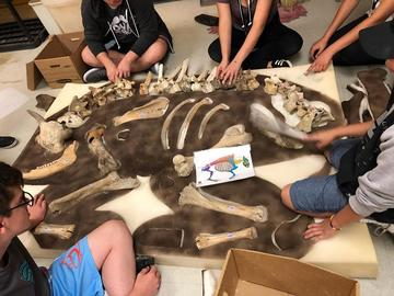 "Graduate students with the Department of Anthropology and Archaeology hosted a dig where campers uncovered a buffalo skeleton. ""Some of the students were really interested in the deer skeleton,"" says Tina Peterson, graduate student."