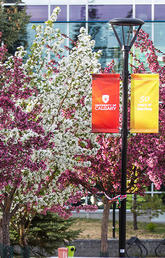 University of Calgary a global intellectual hub
