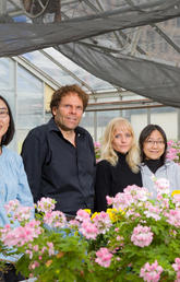 A University of Calgary-led research team, including Xue Chen, Peter Facchini, Jillian Hagel and Limei Chang, has discovered the gene for a new protein crucial for naturally and efficiently producing a compound in opium poppy plants used to make opiate pain-killing drugs.