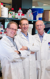 University of Calgary scientists Samuel Weiss, left, John Kelly and Greg Cairncross are part of a team of investigators at the Clark H. Smith Brain Tumour Centre working to revolutionize the detection, prevention and treatment of brain cancers. Photo by Riley Brandt, University of Calgary