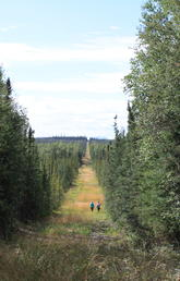 View from the inside of a seismic line cut through Alberta's boreal forest. Photo by Sarah Cole