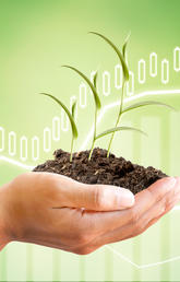 Hand holding seedling, with stock graphs in background